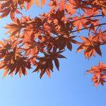 autumn-leaves-1155113_640
